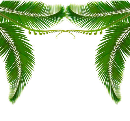 nature background: Palm leaves on white background. Vector illustration.