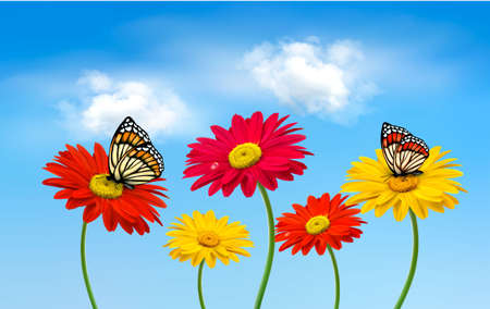 gerber flowers: Nature spring gerber flowers with butterflies  Vector illustration.