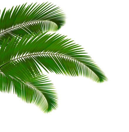 Hojas de palmera sobre fondo blanco. Vector ilustración.