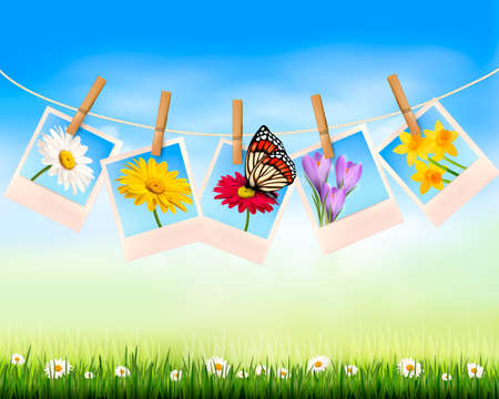 Nature background with photo with flowers and butterfly   Vector