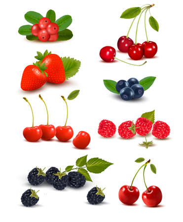 mellow: Big group of fresh berries and cherries illustration.