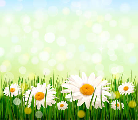 summer beauty: Nature background with green grass and flowers and blue sky