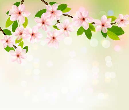꽃이 만발한: 봄 꽃이 만발한 트리 브런치와 봄 배경