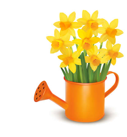 Yellow fresh spring flowers in green watering can illustration