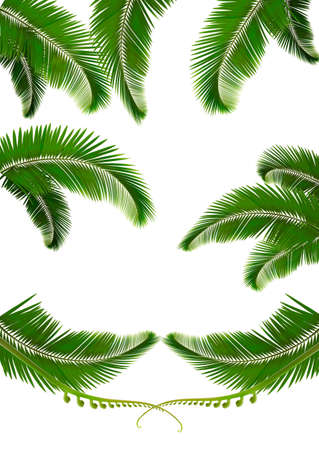 coconut: Set of backgrounds with palm leaves. Vector illustration