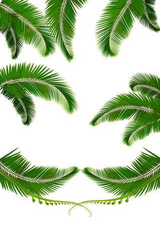 Set von Hintergründen mit Palmblättern. Vektor-Illustration
