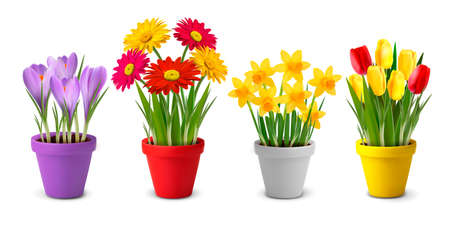 Collection of spring and summer colorful flowers in pots and watering can. Vector Vector