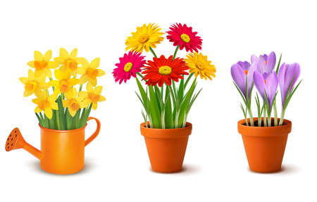 Collection of spring and summer colorful flowers in pots and watering can. Vector Illustration