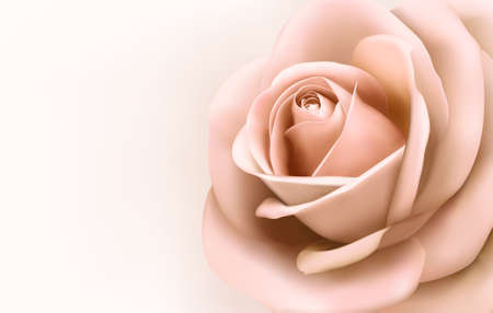 roses background: Background with beautiful pink rose. Vector Illustration