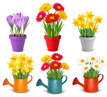 Collection of spring and summer colorful flowers in pots and watering can