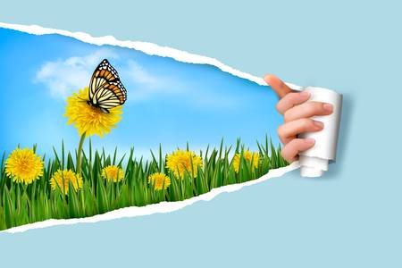 ripped paper background: Ripped paper background with dandelions field a butterfly  Vector   Illustration