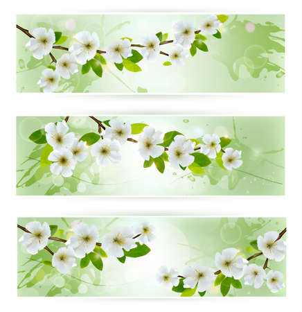 Three nature banners with blossoming tree branches  illustration Stock Vector - 19508040