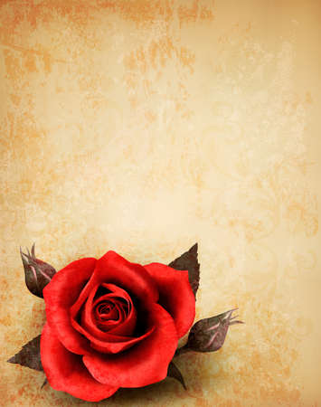 Big red rose on old paper background. Vector.  Vector