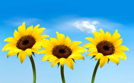 Nature background with three yellow sunflowers. Vector Stock Vector - 19803207