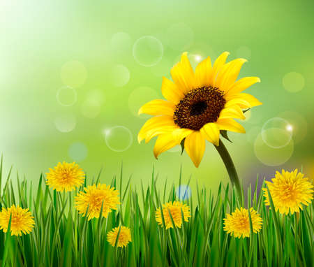 Summer background with yellow flowers and grass. Vector.  Vector