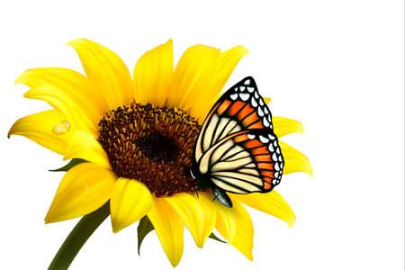 Słonecznik natura z motylem. Ilustracji wektorowych.