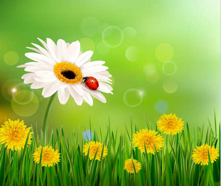 Summer nature background with ladybug on white flower. Vector.  Illustration