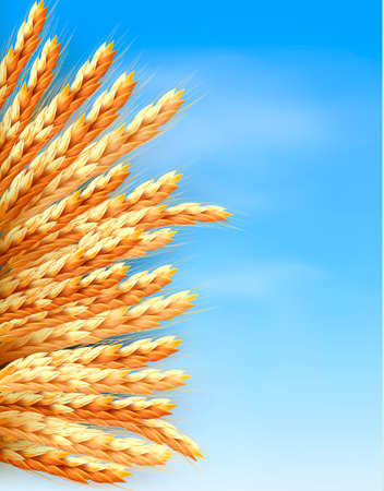 Ears of wheat in front of blue sky illustration. Vector