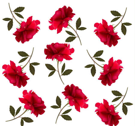 rose bud: Holiday pattern with red beautiful roses. Vector