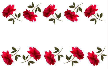 Holiday background with red beautiful roses. Vector Stock Vector - 20457486