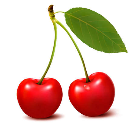 sour cherry: Two red cherry berries with leaf. Vector.