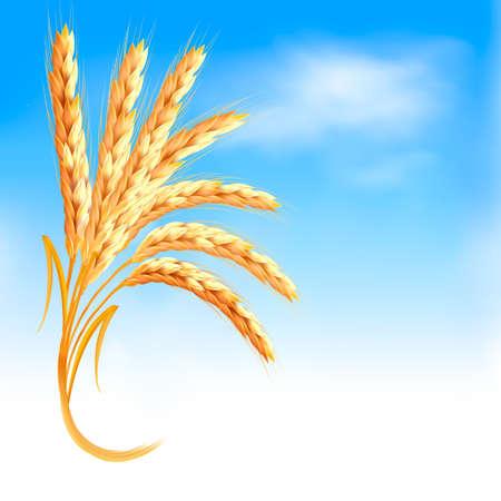Oren van tarwe in de voorkant van blauwe hemel.