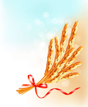 Ears of wheat  with red ribbon.  Vector