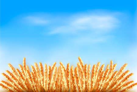 thresh: Espigas de trigo delante del cielo azul. Vectores