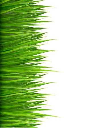 Natuur achtergrond met groene gras. Stock Illustratie