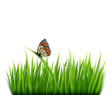 Nature background with green grass and a butterfly.