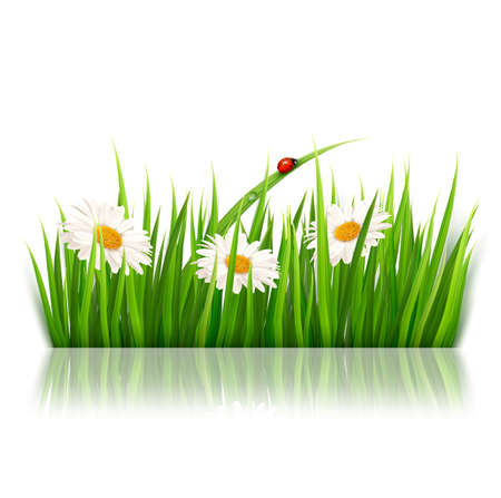 Nature background with green grass and flowers  Vector
