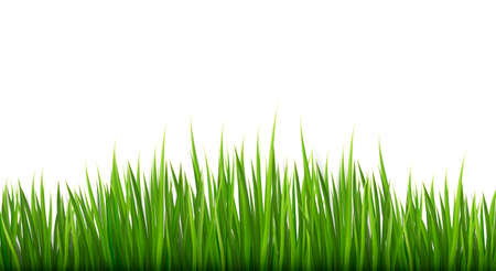 turf: Nature background with green grass.