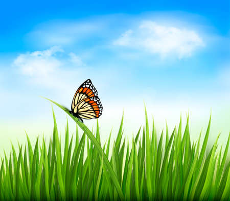 high angle view: Nature background with green grass and a butterfly. Vector.