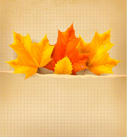 Autumn background with leaves. Back to school. Vector illustration.  Vector