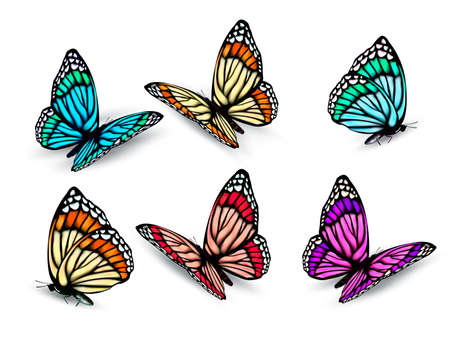 blue violet bright: Set of realistic colorful butterflies. Vector