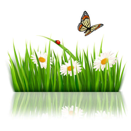 Nature background with green grass and flowers Vector.  Vector