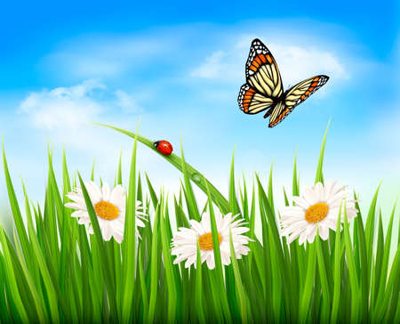 high angle view: Nature background with green grass, flowers and a butterfly. Vector.