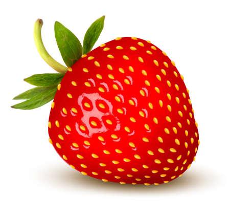 Strawberry. Vettore.
