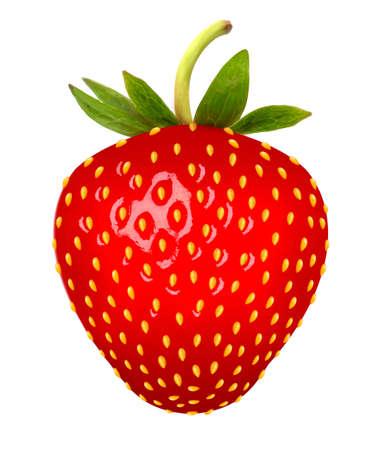 frutilla: Fresa. Vectorial.