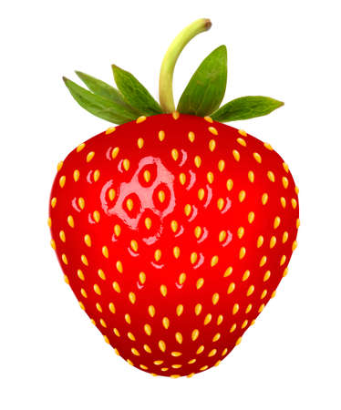 truskawka: Strawberry. Vector.