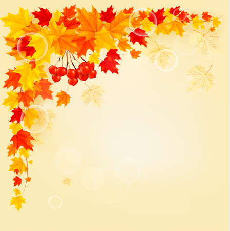 Autumn background with colorful leaves  Back to school  Vector illustration   Stock Vector - 21643159