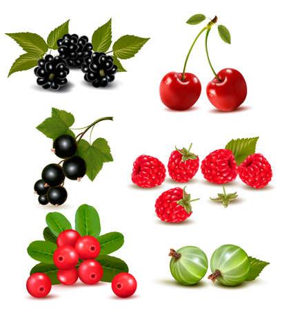 arandanos rojos: Gran grupo de las bayas frescas y cerezas. Ilustración vectorial