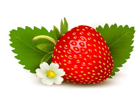 Ripe sweet strawberry and flower with leaves. Vector.  Illustration