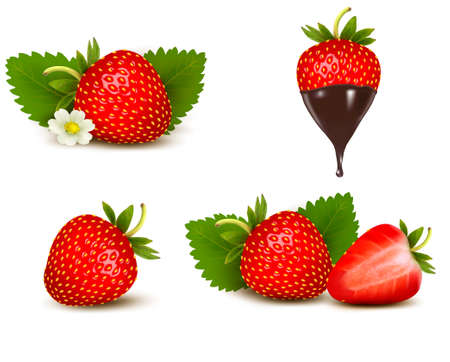 Set of ripe sweet strawberry and flower with leaves and chocolate. Stock Vector - 22238667