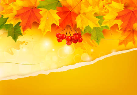 Autumn background with colorful leaves and ripped paper illustration.  Vector