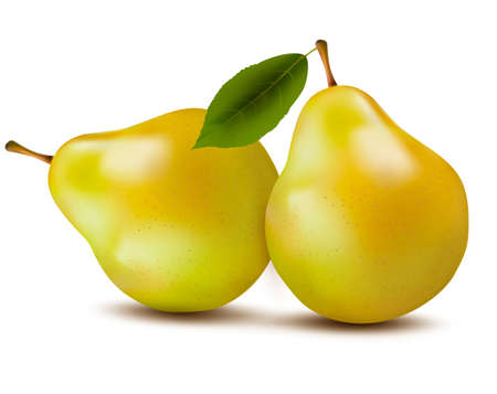 Fresh pears isolated on white. Vector Stock Vector - 22506954