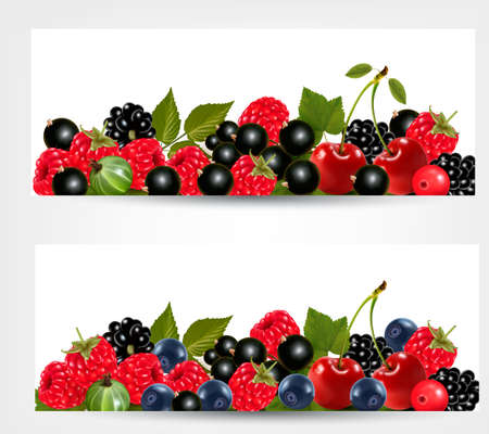 cherries isolated: Two banners with delicious ripe berries. Illustration
