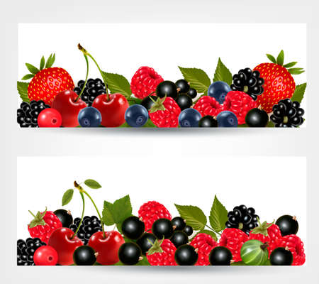 foxberry: Two banners with delicious ripe berries. Illustration