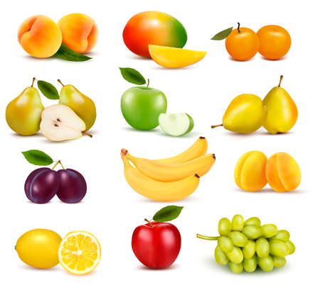mangoes: Big group of different fruit. Vector.
