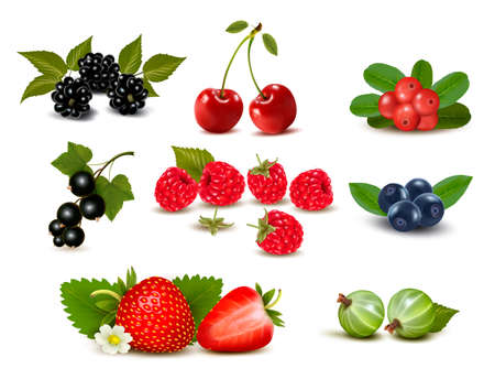 bilberry: Big group of fresh berries and cherries. Vector illustration
